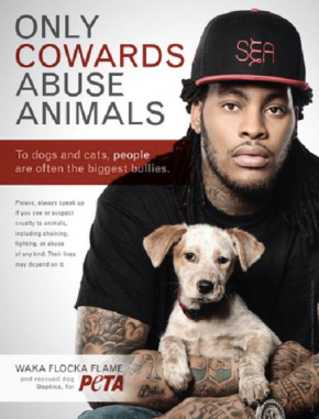 Waka Classboy pet dog animals no abuse no fighting
